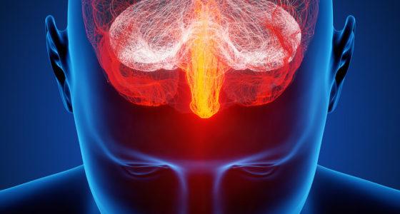 Zijn wij ons brein?